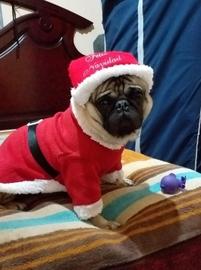 Feliz navidad les desea mi cachorro #Navidad Oh My Pet!