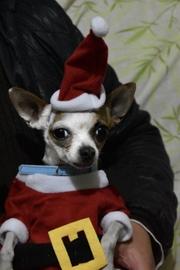 Don Claus #Navidad Oh My Pet!