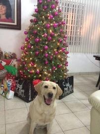 Zucky en navidad #Navidad Oh My Pet!