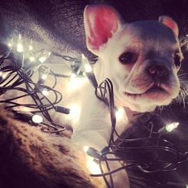 Ilumina mis noches #Navidad Oh My Pet!