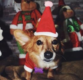 Kitti Señora Claus #Navidad Oh My Pet!