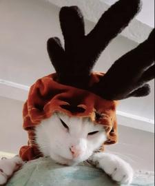 Rodolfo el Reno #Navidad Oh My Pet!