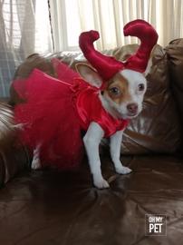 Minnie de diabla #OhMyPet