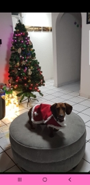 Mila claus #Navidad Oh My Pet!