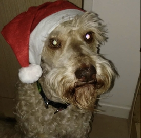 Barbas Clous #Navidad Oh My Pet!