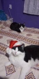 El santa claus silvestre #Navidad Oh My Pet!