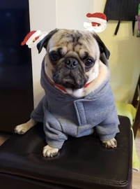 Feliz navidad a todos #Navidad Oh My Pet!