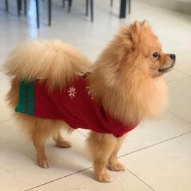 Posando con su suéter navideño #Navidad Oh My Pet!