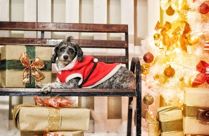 Rey de la Navidad #Navidad Oh My Pet!