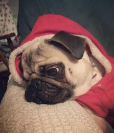 Una Navidad diferente #Navidad Oh My Pet!