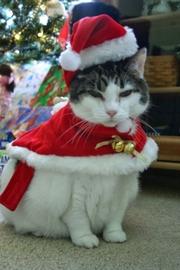 Mico enojado por la navidad #Navidad Oh My Pet!