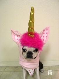 Unicornio bebé #OhMyPet