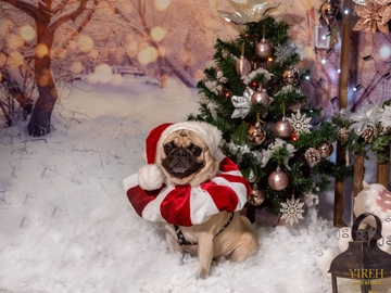 Rey Boris en la villa navideña #Navidad Oh My Pet!