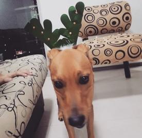 El reno mas bonito #Navidad Oh My Pet!