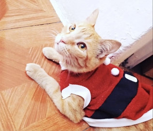 Guero Navideño #Navidad Oh My Pet!