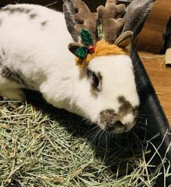 Rabbit  Christmas #Navidad Oh My Pet!