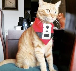 Guerito feliz en navidad #Navidad Oh My Pet!
