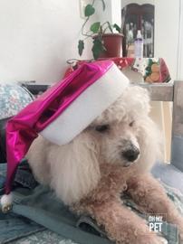 Fiona Christmas #OhMyPet