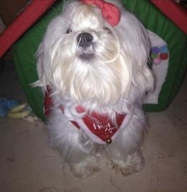 Juanita navideña #Navidad Oh My Pet!