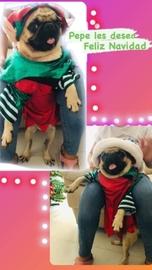 Pepe navideño jojo #Navidad Oh My Pet!
