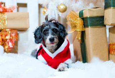 ¡ Pelunavidad ! #Navidad Oh My Pet!
