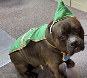 El gordo disfrazado #Navidad Oh My Pet!