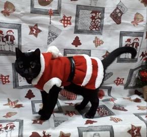 El Dios de la navidad, mi gato Black #Navidad Oh My Pet!