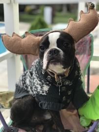 Luke el Reno grinch #Navidad Oh My Pet!