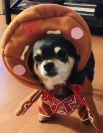 Galleta de Jengibre #Navidad Oh My Pet!