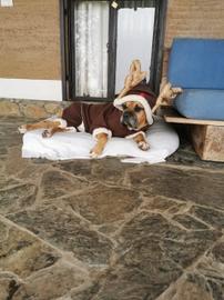 Un reno muy viejito #Navidad Oh My Pet!
