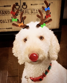 Mi pequeño es un Reno #Navidad Oh My Pet!