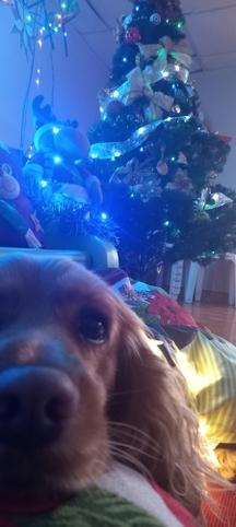 MI PERRO PUPPY EN NAVIDAD #NavidadOhMyPet #Navidad Oh My Pet!