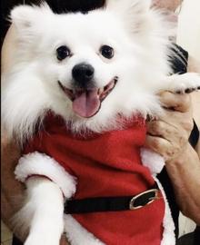 Princesa #Navidad Oh My Pet!