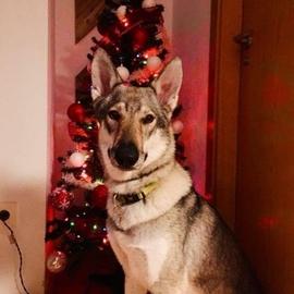 Feliz Navidad #Navidad Oh My Pet!