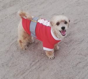 Mi perrito de Santa Claus #Navidad Oh My Pet!