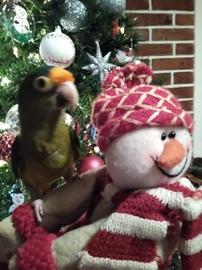 Panchito Navideño #Navidad Oh My Pet!