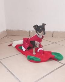 Hola mi nombre es dulce les deseo una gran navidad #Navidad Oh My Pet!