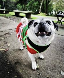 Toby #Navidad Oh My Pet!