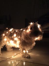 Lea love #Navidad Oh My Pet!