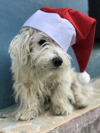 Blanca Navidad #Navidad Oh My Pet!