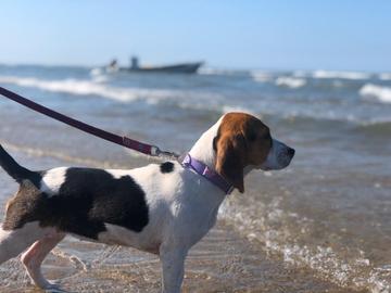 Molly conociendo la playa #HistoriaOhMyPet