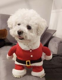 Lula  Santa Claus #Navidad Oh My Pet!