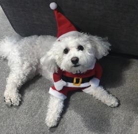 Disfrutando el frio de la navidad #Navidad Oh My Pet!
