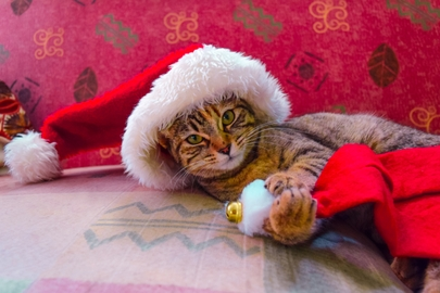 ¡Ya llego MICHICLAUS! #Navidad Oh My Pet!